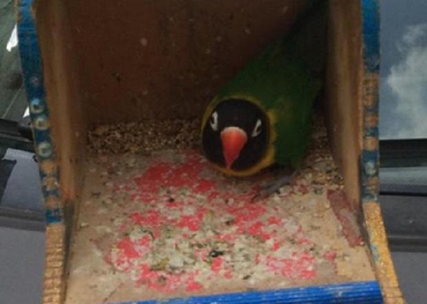 accattonaggio-con-pappagallo