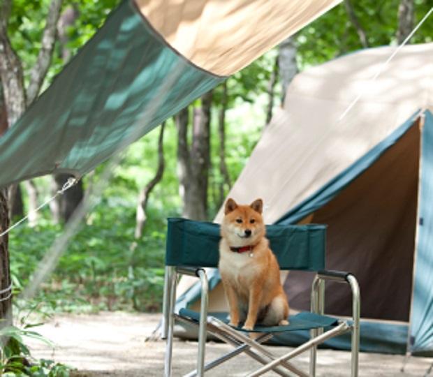 dog-camp-nelle-case-per-anziani