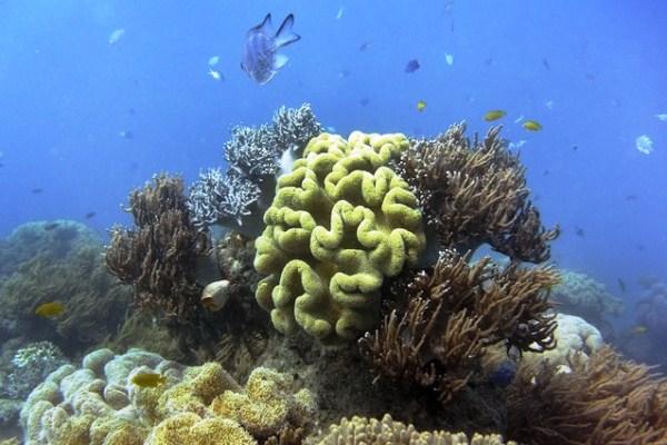 Le creme solari massacrano le barriere coralline