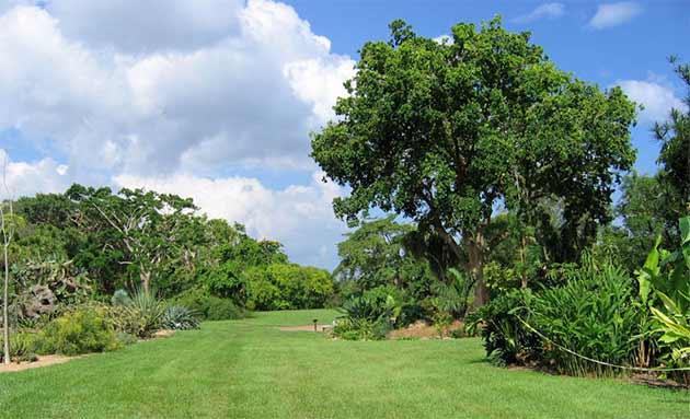 Madagascar-le-foreste-si-salvano-anche-grazie-italia